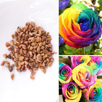 OnePerfectShop - 100pcs Of Rare Rose Rainbow Flowers Seeds flower seeds