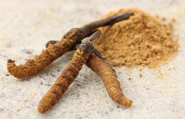 Cordyceps | Brother Nature Superfood Guide