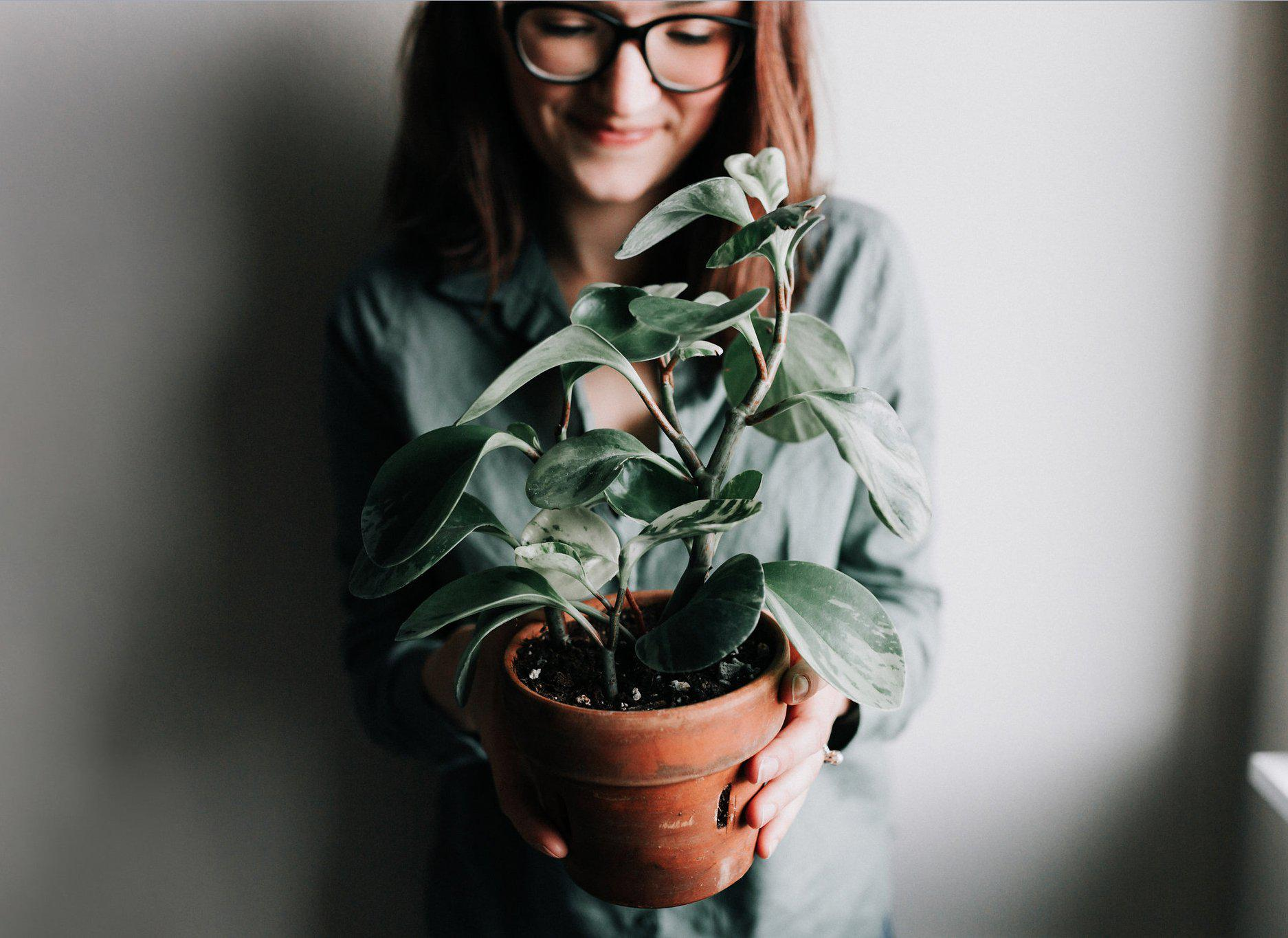 Top 3 Houseplants for Beginners (& How Not to Kill Them!) | Guest Contributor Dusty Hegge of Revive Nursery