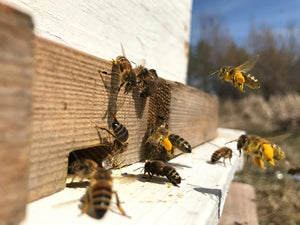 A Beginner's Guide to Small Scale Beekeeping - Guest Contributor Lindsay with Beeproject Apiaries