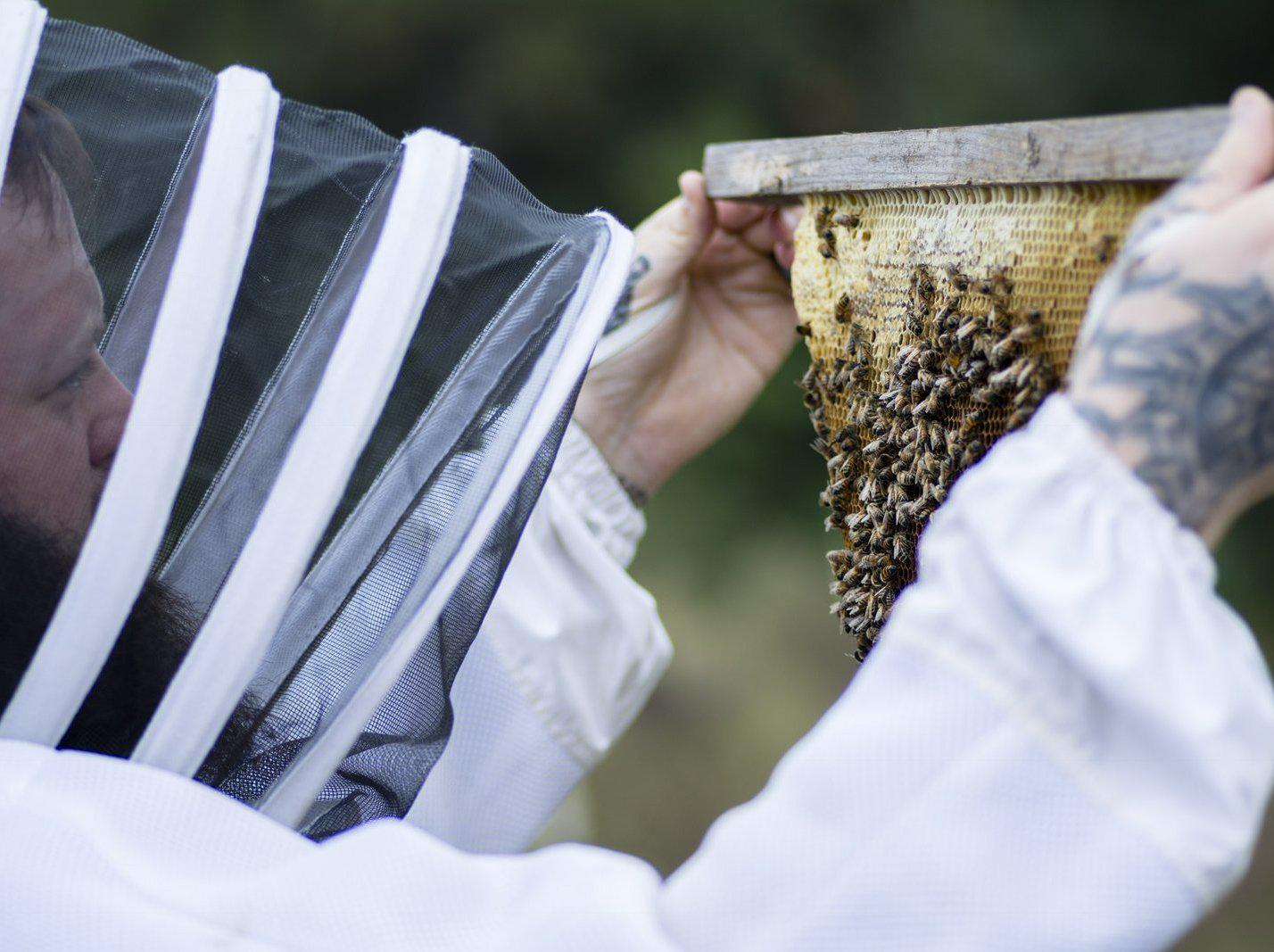 5 Fun Facts About Bees & Honey - Guest Contributor Aaron Jennings