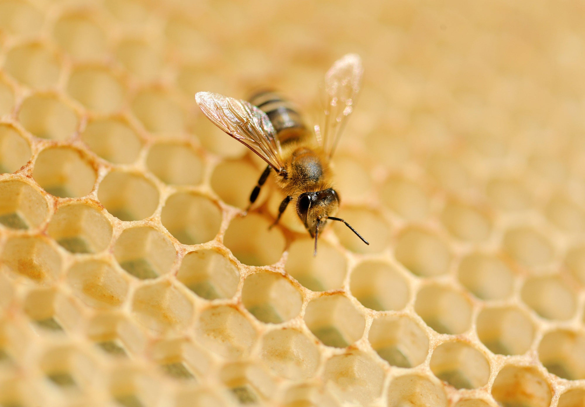 Help Us Celebrate National Honey Bee Day!