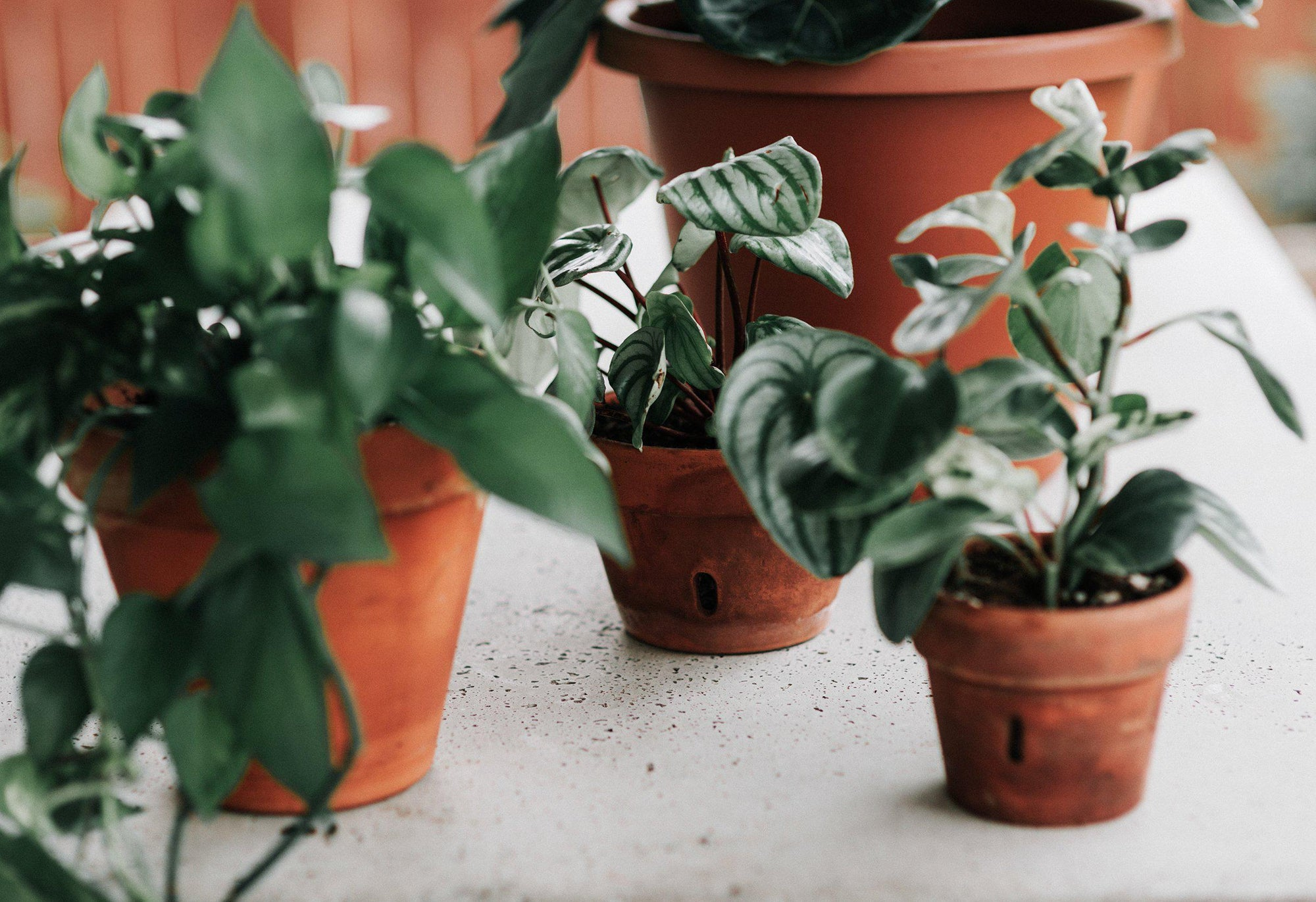 Photosynthesis for Houseplant Owners! | Guest Contributor Dusty Hegge of Revive Nursery