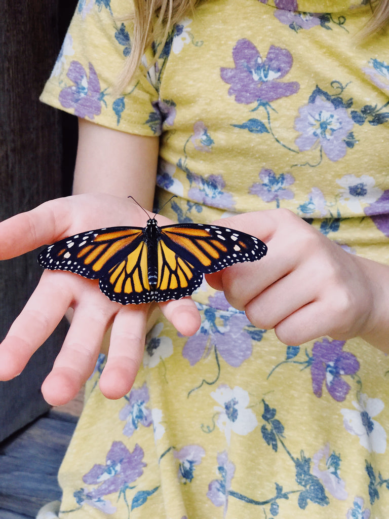 monarch, butterfly, pollinator, education, study, children, homeschool