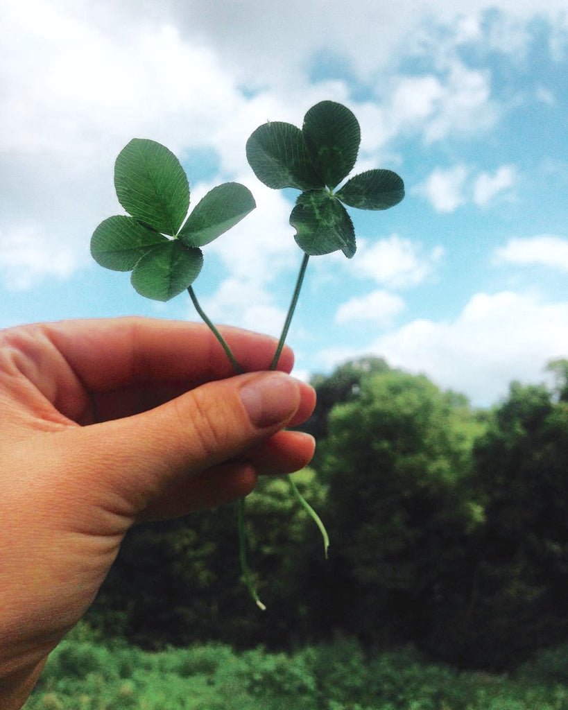 four leaf clover, clover, lucky, luck, irish, saint patrick's day