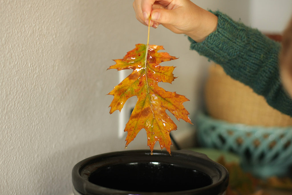 beeswax leaf preservation, leaf craft
