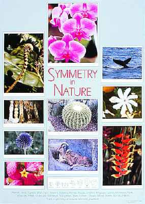 SYMMETRY IN NATURE poster