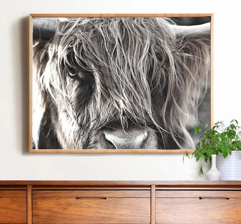 Nordic  Highland Cow Canvas Print