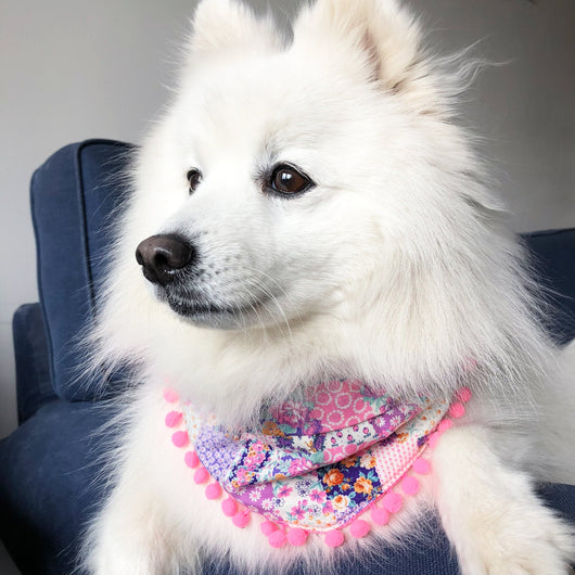 Pretty in Pink Pom Pom Dog Bandana