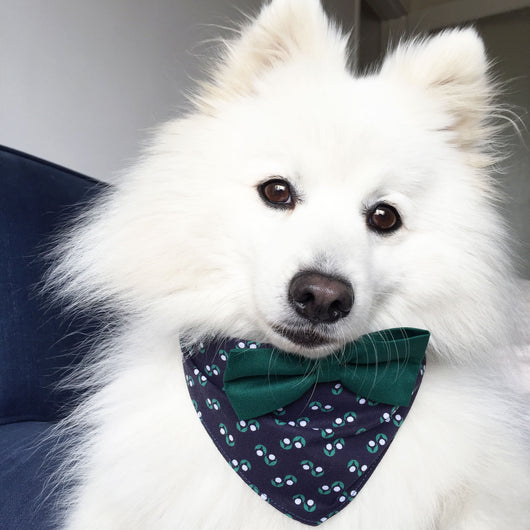 Emerald Green & Navy Spot Dog Bandana with Bow Tie