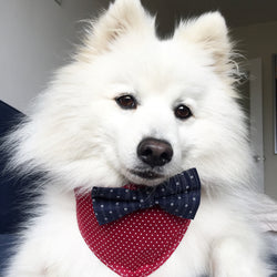 Red & White Spot Dog Bandana with Navy Stripe Bow Tie