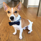 Navy & White Spotty Bow Tie Collar