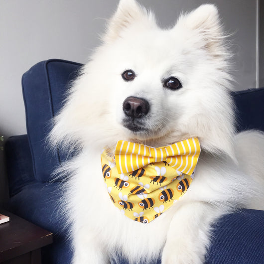 Sweet as Honey Bow Tie Bandana