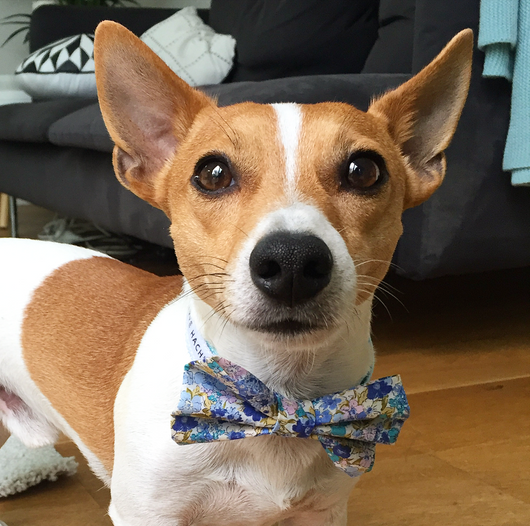 Bluebell Floral Bow Tie Collar