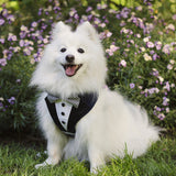Navy Bow Tie Tuxedo Dog Harness