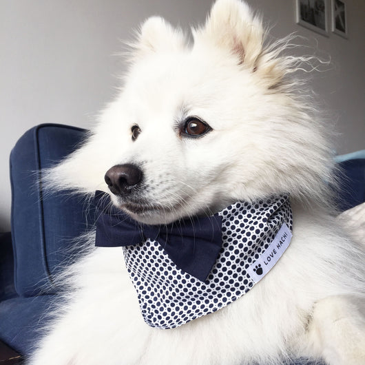 Navy & White Spot Print Dog Bandana with Bow Tie