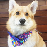 Pippa Rainbow Bow Tie Dog Bandana