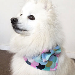 Rainbow Print Bow Tie Dog Bandana
