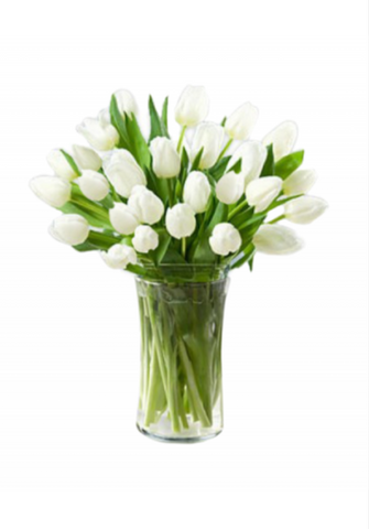 30 white tulip in glass vase