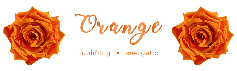 Orange Rose - Colour Meaning