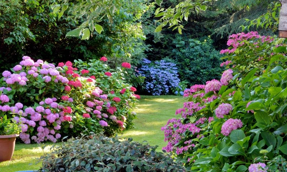 Upgrade Your Garden With These Tricks