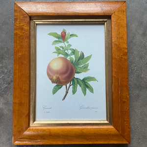 Antique Framed Lithograph of a Pomegranate