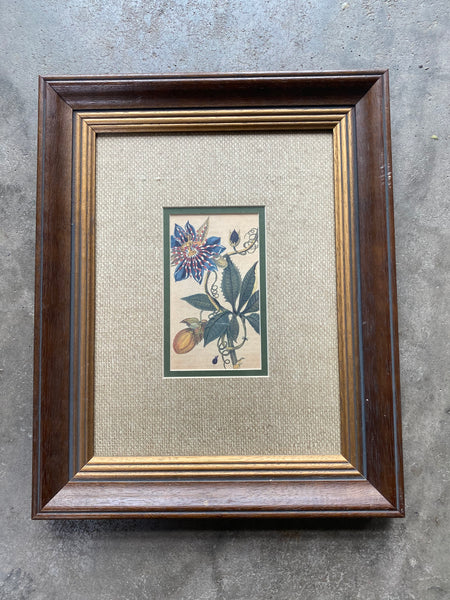 Interesting Hand Colored Botanical Lithograph Beautifully Mated and Framed