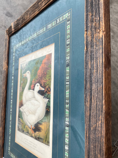Great Vintage Print of Aylesbury Ducks with Interesting Mat & Frame