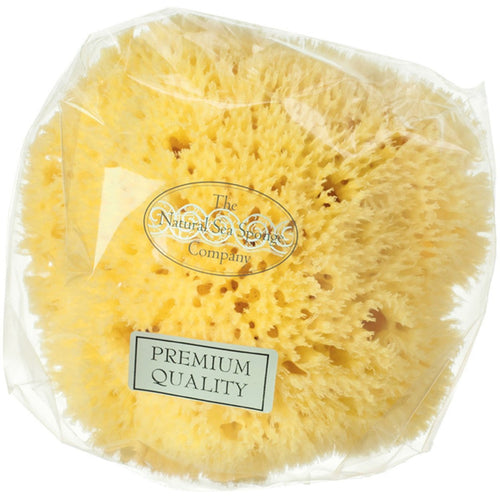 Honeycomb Mediterranean Sponge - The Beauty Editor
