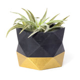 Concrete Geometric Planter: Black & Gold (Large)