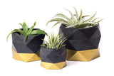 Concrete Geometric Planter: Black & Gold (Small)