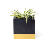 Concrete Cube Planter: Black & Gold