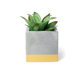Concrete Cube Planter: Gold