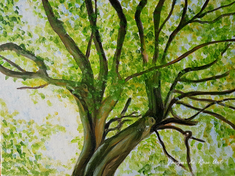 R - Summer Beech Tree