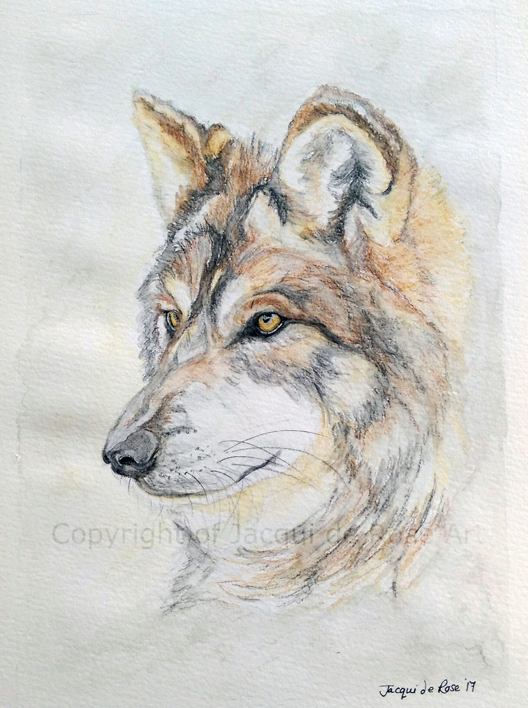 "Card - 7 x 5"" - Animal - Wolf Portrait"