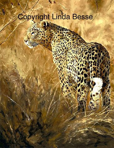 Leopard Light Limited Edition Canvas Print Linda Besse