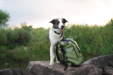 Celebrating #NationalDogDay: Our Favorite Adventure Dogs