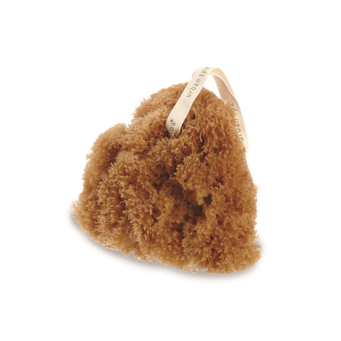 Urban Spa All-Natural Sea Sponge, 1ct 771590119006S541