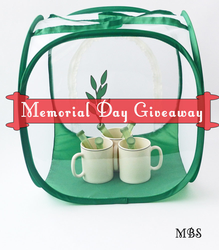 Baby Cube Butterfly Cage Memorial Day Giveaway
