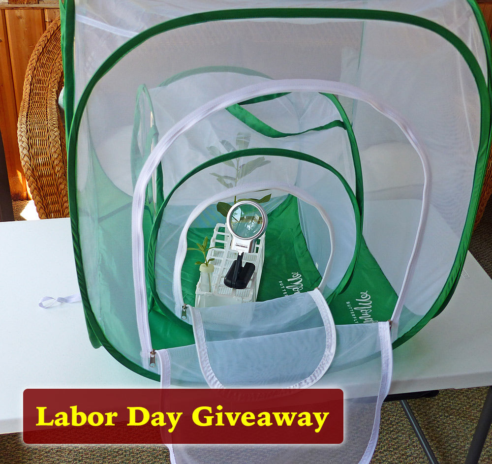 BIG Baby Labor Day 🐛Cage Giveaway 🍁 Enter thru September 6th 🦋