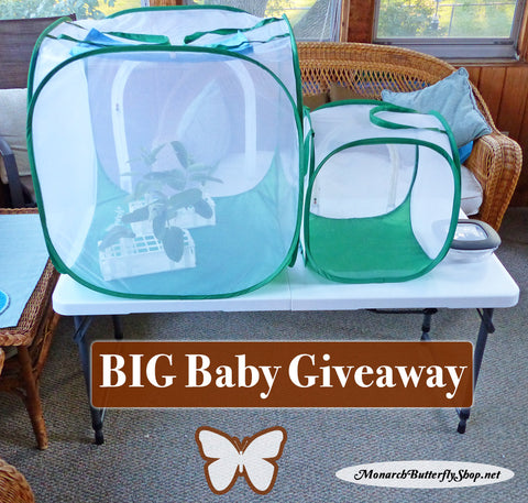 Big & Baby Butterfly Cage Bundle Giveaway through August 31st
