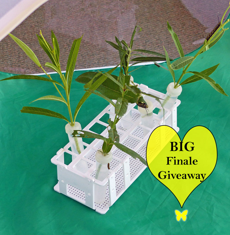 Big Final Giveaway Butterfly Cage + Accessories through October 5th