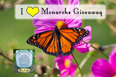 I ❤️ Monarchs Bundle Giveaway- Enter thru February 14 💝