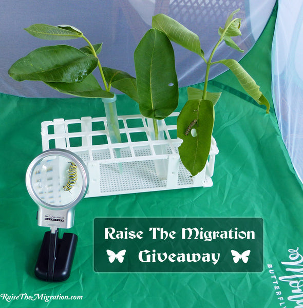 Raise the Migration Giveaway- Cage + Supplies- Enter thru July 31st 🔔🐛