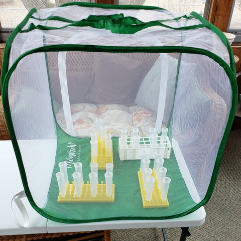 Caterpillar Cages with Clear Mesh- Kits and Supplies to Raise Monarch Butterflies