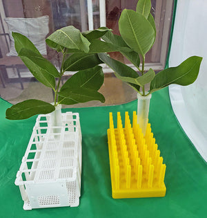 Floral Tubes and Racks Collection for Feeding Caterpillars