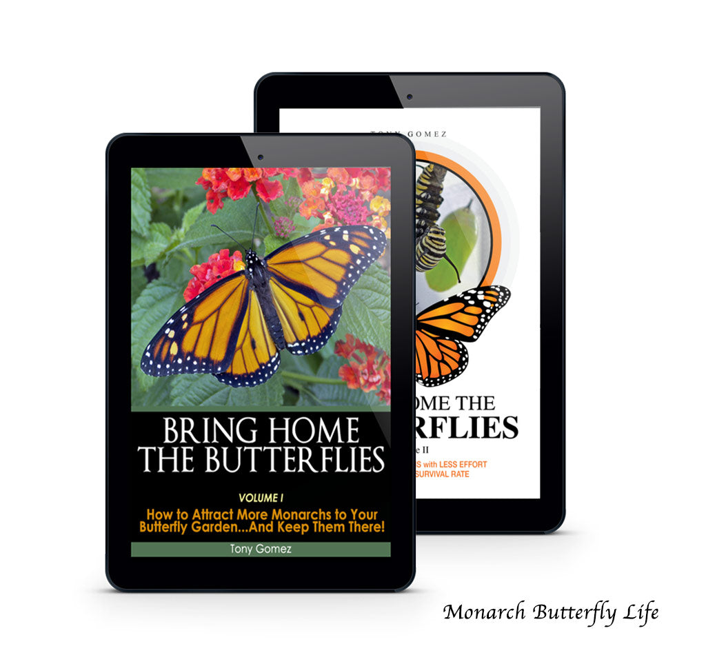 Monarch Butterfly Kit Book Bundle- all the info you need for attracting more monarchs to your garden, raising them from tiny egg through all 4 stages of the butterfly life cycle