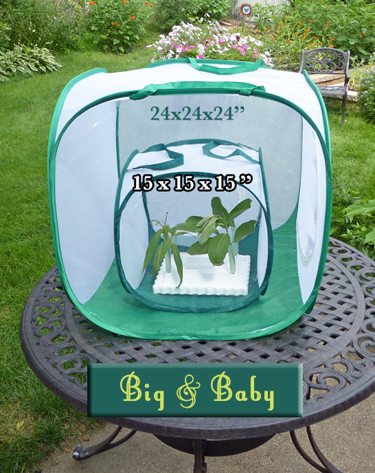Big Cube and Baby Cube Butterfly Cage Comparison- Which size fits your needs for raising monarchs through the butterfly life cycle?