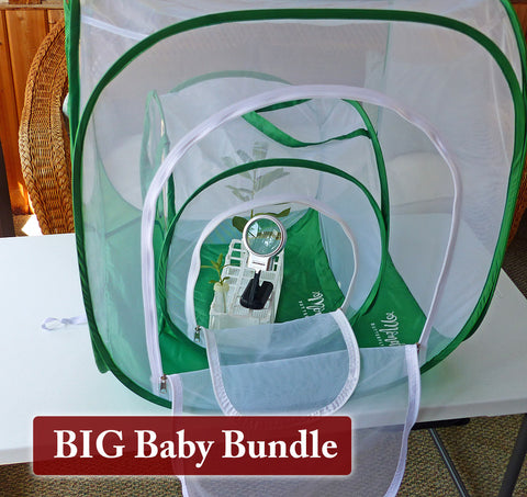 Big Baby Butterfly Cage+ Raising Supplies Bundle Giveaway through August 31st