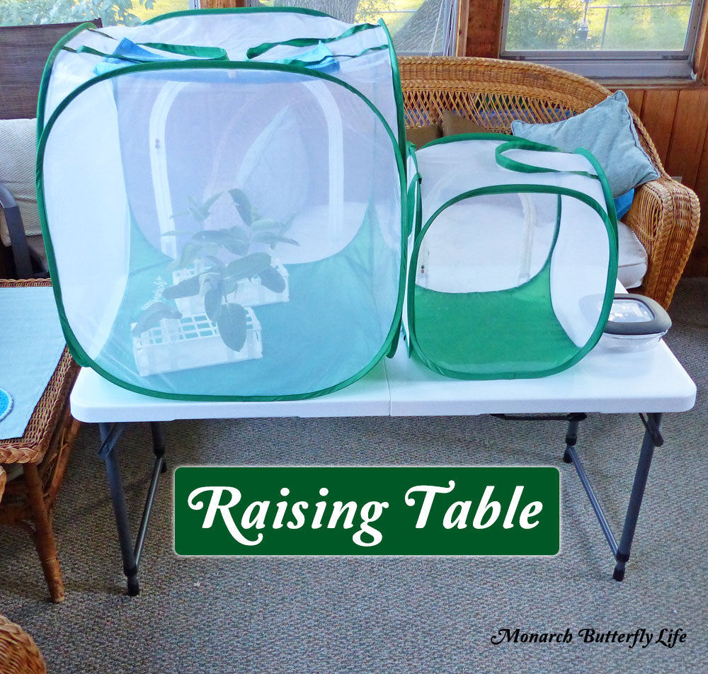 Adjustable Butterfly Cage Tables for Elevating Caterpillar Cages- Raise Monarchs